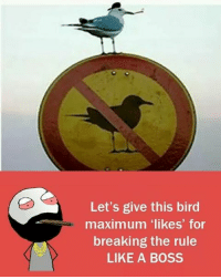 """Memes, Birds, and 🤖: Let's give this bird  maximum """"likes"""" for  breaking the rule  LIKE A BOSS Twitter: BLB247 belikebro sarcasm Follow @be.like.bro"""
