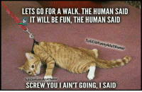 Adult Humor Memes: LETS GO FOR A WALK. THE HUMAN SAID  IT WILL BE FUN, THE HUMAN SAID  ToxicJ FunnyAdult Humor  ToXiCJG Funny Adult Humor  SCREW YOU I AINT GOING, I SAID