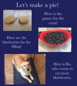Pictures, Make A, and Who: Let's make a pie!  Here is the  pastry for the  crust!  Here are the  blueberries for the  filling!  Here is Bo,  who wants to  eat more  blueberries. Finished pie will be posted later, more pictures of Bo upon request.