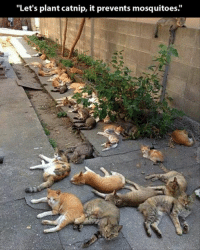 """20 Funny Animal Pictures: """"Let's plant catnip, it prevents mosquitoes.' 20 Funny Animal Pictures"""