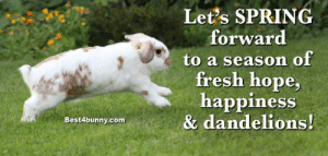 Fresh, Memes, and Happy: Let's SPRING  forward  to a season of  fresh hope,  happiness  & dandelions!  Best4bunny.com Happy Monday! Bring on Spring! www.best4bunny.com