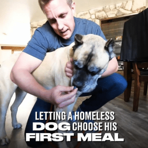 Dank, Homeless, and Rocky: LETTING A HOMELESS  DOGCHOOSE HIS  FIRST MEAL This homeless dog got to choose whatever he wanted for his first home-cooked meal. So many choices... 😯👏  Rocky Kanaka