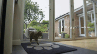 Memes, Discover, and 🤖: Letting your pets in Your cat already has the key to your front door – its microchip!  Only letting your cat in and keeping intruders out.   Discover more SureFlap pet tech products at sureflap.com