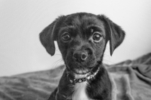 Black, Black and White, and White: Lewie in Black and White