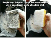 Memes, Dirty, and Dish: lfreplacinga dirty dish sponge with a new one puts  you in a good mood, youTe offically an adult. it's true