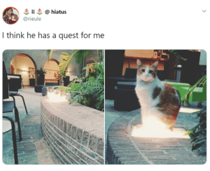 Quest, International, and Cat: li  @hiatus  @rieule  I think he has a quest for me It's International Cat Day So Why Not Indulge Yourself With 30 Of The Funniest Cat Tweets Ever - I Can Has Cheezburger?