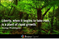 "Liberty, when it begins to take root, is a plant of rapid growth. - George Washington https://www.brainyquote.com/quotes/quotes/g/georgewash118444.html #brainyquote #QOTD #trees #washington: Liberty, when it begins to take root,  is a plant of rapid growth.  George Washington  ""Z Brainy  Quote Liberty, when it begins to take root, is a plant of rapid growth. - George Washington https://www.brainyquote.com/quotes/quotes/g/georgewash118444.html #brainyquote #QOTD #trees #washington"