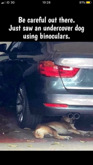 the-memedaddy:Meirl: liD 3G  10:28  81%  Be careful out there.  Just saw an undercover dog  using binoculars. the-memedaddy:Meirl