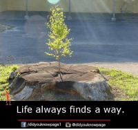 life finds a way: Life always finds a way.  didyouknowpagel  Odidyouknowpage