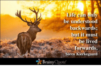 kierkegaard: Life can  be understood  backwards;  but it must  be lived  forwards.  Soren Kierkegaard  Brainy  Quote