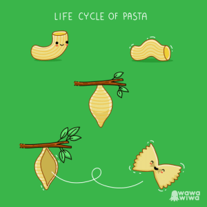 [OC] A delicious cycle: LIFE CYCLE OF PASTA  wawO  wiwa [OC] A delicious cycle