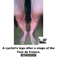 Facts, Life, and Memes: LIFE FACTS  A cyclist's legs after a stage of the  Tour de France. A cyclist's legs after a stage of the Tour de France.