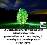 Facts, Life, and Memes: LIFE FACTS  A Dutch designer is working with  scientists to create  glow-in-the-dark trees, hoping to  one day use them in place of  street lights.