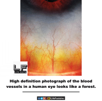 human eyes: LIFE FACTS  High definition photograph of the blood  vessels in a human eye looks like a forest.