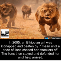 Facts, Life, and Memes: LIFE FACTS  In 2005, an Ethiopian girl was  kidnapped and beaten by 7 until a  pride of lions chased her attackers off.  The lions then stayed and defended her  until help arrived