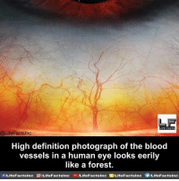human eyes: LIFE FACTS  @LifeFactslnc  High definition photograph of the blood  vessels in a human eye looks eerily  like a forest.  f/LifeFactsInc G ILifeFactsInc  ILifeFactsInc DVLifeFactsInc  OILifeFactsInc