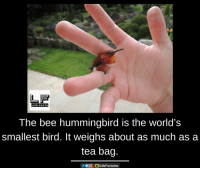 Facts, Life, and Memes: LIFE FACTS  The bee hummingbird is the world's  smallest bird. It weighs about as much as a  tea bag.