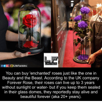 Beastly: LIFE FACTS  You can buy 'enchanted' roses just like the one in  Beauty and the Beast. According to the UK company  Forever Rose, their roses can live up to 3 years  without sunlight or water- but if you keep them sealed  in their glass domes, they reportedly stay alive and  beautiful forever (aka 20+ years).