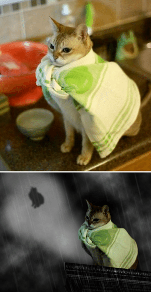 Life, Tumblr, and Blog: life-insurancequote:CAT WEARING A DISH RAG!