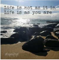 "Life, Tumblr, and Blog: Life is not as it is  Life is as you are <p><a href=""http://reginafloyd.tumblr.com/post/148860540959/life-greatquotes-whoareyou-at-kauai"" class=""tumblr_blog"">reginafloyd</a>:</p>  <blockquote><p>#life #greatquotes #whoareyou  (at Kauai)</p></blockquote>"