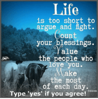 Arguing, Horses, and Memes: Life  is too short to  argue and fight  Count  your blessings.  Yalue  the people who  love you.  Make  the most  of each day.  Unknown  Type 'yes' if you agree! The Horse Mafia  Make the most of each day <3