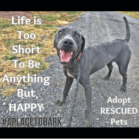 """Dogs, Energy, and Friends: Life is  Too  Short  To Be  Anything  But  RESCUED """"Motlow"""" is the poster boy for Happiness! He is non stop, go-go-go!.   Loves everyone's he meets & Lives to play hard:) Handsome & high energy, this young guy needs structure & training to be the best he can be. As with so many dogs who have loads of energy it can be a challenge. By investing time, giving dogs long walks & structured training you will have a lifelong friend of unconditional love & daily exercise that is good for you too💕  #everylifematters #aplacetobark #walkyourdog"""
