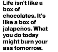 Boxing, Memes, and Chocolate: Life isn't like a  box of  Chocolates. It's  like a box of  jalapenos. What  you do today  might burn your  ass tomorrow. LIKE|SHARE|TAG