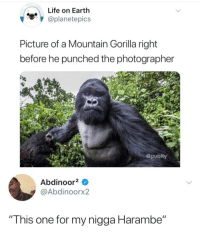 "Instagram, Life, and Meme: Life on Earth  @planetepics  Picture of a Mountain Gorilla right  before he punched the photographer  @pubity  Abdinoor2  @Abdinoorx2  "" This one for my nigga Harambe"" @pubity was voted 'best meme account on Instagram'"