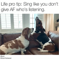 Tag that friend who has heard you belt notes you definitely don't have the vocal range to hit 🔈 @deanthebasset- @chiefthebasset: Life pro tip: Sing like you don't  give AF who's listening  @bark  @deanthebasset Tag that friend who has heard you belt notes you definitely don't have the vocal range to hit 🔈 @deanthebasset- @chiefthebasset