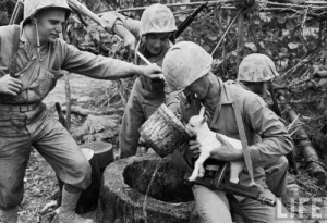 Life, Tumblr, and Goat: LIFE sgtgrunt0331:  U.S. Marines take a break to give a baby goat, they adopted as their platoon mascot, a drink of water during the battle of Okinawa in April 1945.