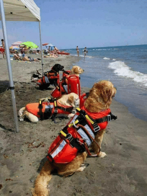 Lifeguards ready to save the day in Croatia: Lifeguards ready to save the day in Croatia