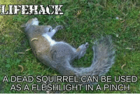 DV Bender: LIFEHAOK  A DEAD SQUIRREL CAN BE USED  AS A FLESHLIGHT IN A PINCH DV Bender