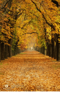 Beautiful, Tumblr, and Blog: lifeisverybeautiful:  tunnel by Krisztian Fodor / 500pxAutumn Leaves,  Beautiful Tree Tunnel
