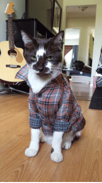 lifeofamooseboy:  roxylalonde:airyairyquitecontrary:The vet suggested a shirt instead of a cone for my cat. Fun Fact: Most Cats wear baby sizes 0-3 months. - Imgur this cat is more grunge than i could ever be  omg: lifeofamooseboy:  roxylalonde:airyairyquitecontrary:The vet suggested a shirt instead of a cone for my cat. Fun Fact: Most Cats wear baby sizes 0-3 months. - Imgur this cat is more grunge than i could ever be  omg