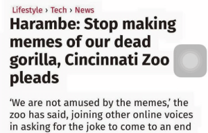 bang:  they wanna kill the memes like they killed Harambe: Lifestyle> Tech> News  Harambe: Stop making  memes of our dead  gorilla, Cincinnati Zoo  pleads  the memes, the  'We are not amused by  zoo has said, joining other online voices  in asking for the joke to come to an end bang:  they wanna kill the memes like they killed Harambe