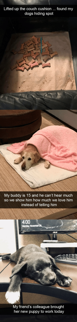 Dog snapsvia @animalsnaps: Lifted up the couch cushion  found my  dogs hiding spot   My buddy is 15 and he can't hear much  so we show him how much we love him  instead of telling him   4:00  Monday, November  My friend's colleague brought  her new puppy to work to  day Dog snapsvia @animalsnaps