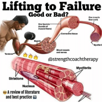 Anaconda, Bad, and Friends: Lifting to Failure  Good or Bad?  One muscle  fiber (cell)  One fascicle  (bundle of  muscle fibers)  Connective tissue  Muscle  Myofibril  Blood vessels  and nerves  Tendon  @strengthcoachtherapy  strengtt  Myofibrils  Striations  Nucleus  A review of literature  and best practice SHOULD YOU LIFT TO FAILURE? - 🚀 The answer: It depends! Usually no, but maybe sometimes yes. @strengthcoachtherapy explains below, and I agree with every word. . 🤔 Lifting to failure is 100% not necessary for gainz and progress. If done too much, it can even hinder progress. For many novice lifters, going to failure is overused and overrated. Sorry bro, but you don't need to scour the gym looking for a spot for every bench press set. Just lift. . ❌ For compound lifts, missing reps can be downright dangerous (squat, bench, deadlift). This is when training injuries happen. Going to failure is much safer when you are performing single joint exercises. Examples include hamstring curls, machine work, lateral raises, arms, etc. These are low risk movements and failing can be helpful to tax smaller muscle groups. . ✅ Failing reps and pushing it to the limit can be be helpful for hypertrophy work and creating maximal oxidative stress. It's also sometimes necessary for power and oly lifters to truly find and push their max. Overall, it is still more advised for bodybuilding techniques. Failing should also be used less frequently as you get stronger and closer to your genetic potential. . 🤓 Smart training is all about weighing cost versus benefit. Even if you can get away with failing now, it has the potential to cause problems down the road. (Looking at you, young lifters). Furthermore, lifting to your 1 rep maximum on a weekly basis is not a wise way to structure your training. Try a reps day, a light day, and a heavy day, instead of putting all 3 into everyday. . 🙅🏽‍♂️ Lifelong gains are made by maximizing reward and minimizing risk. It's a marathon, not a sprint. Don't make missing reps a habit, the benefit is minimal if any at all. Trust me my friends, you can still train hard and reach your goals by finishing your lifts. . StrengthCoachTherapy MyodetoxOrlando Myodetox