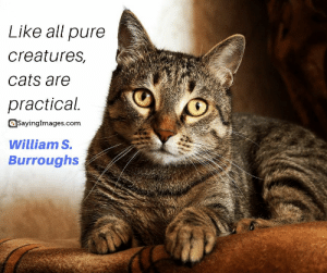 30 Pet Quotes on Love That Has No Boundaries #sayingimages #petquotes #quotes: Like all pure  creatures,  cats are  practical.  SayingImages.com  William S.  Burroughs 30 Pet Quotes on Love That Has No Boundaries #sayingimages #petquotes #quotes