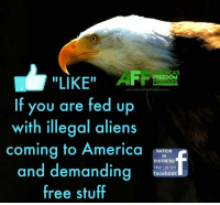 """Sick of it!: LIKE""""  FREEDOM  FIG ERS  www.armericas freedomfighters.com  If you are fed up  with illegal aliens  coming to America  NATION  IN  DISTRESS  and demanding  like us on  facebook  free stuff Sick of it!"""