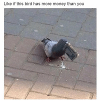 Money, You, and Times: Like if this bird has more money than you Hard times.  😂 https://t.co/FpTz8OnMWj