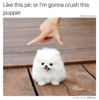 Crush, Funny, and How: Like this pic or l'm gonna crush this  pupper  @tank.sinatra  MADE WITH MOMUS This isn't how I wanted to start my weekend either, but here we are