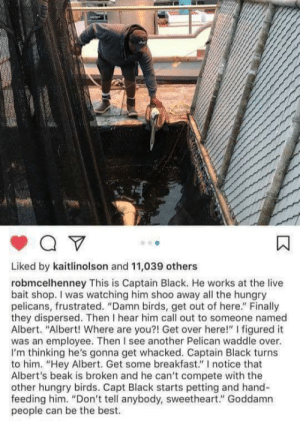 "awesomacious:  All the best for Albert 🥰: Liked by kaitlinolson and 11,039 others  robmcelhenney This is Captain Black. He works at the live  bait shop. I was watching him shoo away all the hungry  pelicans, frustrated. ""Damn birds, get out of here."" Finally  they dispersed. Then I hear him call out to someone named  Albert. ""Albert! Where are you?! Get over here!"" I figured it  was an employee. Then I see another Pelican waddle over.  I'm thinking he's gonna get whacked. Captain Black turns  to him. ""Hey Albert. Get some breakfast."" I notice that  Albert's beak is broken and he can't compete with the  other hungry birds. Capt Black starts petting and hand-  feeding him. ""Don't tell anybody, sweetheart."" Goddamn  people can be the best. awesomacious:  All the best for Albert 🥰"