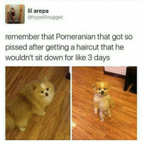 lil arepa  @hypelilnugget  remember that Pomeranian that got so  pissed after getting a haircut that he  wouldn't sit down for like 3 days hi me and @joshin.jo are getting married and you're all invited to our wedding