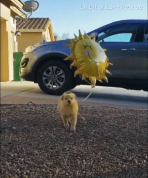 Sunshine pup to cleanse your dirty soul.  By Lil Bit Of Love: Lil Bit or Lo  Rescue Sunshine pup to cleanse your dirty soul.  By Lil Bit Of Love