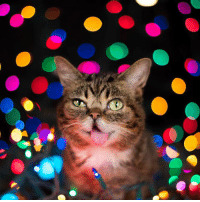 Memes, Calendar, and Toys: Lil BUB's Big Blowout Sale ends tomorrow morning - visit http://bit.ly/BUBlowout for 30-65% off BUB Calendars, Plush Toys, Pillows and more - the biggest sale of the year!   A portion of all proceeds benefit Lil BUB's Big FUND for special needs pets.