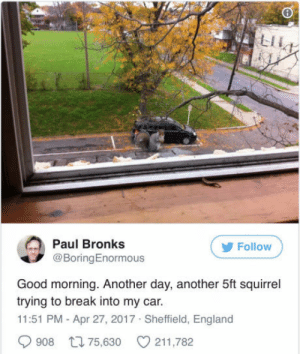 Good Morning, Break, and Good: LIL  Paul Bronks  ( Follow  @BoringEnormous  Good morning. Another day, another 5ft squirrel  trying to break into my car.  11:51 PM - Apr 27, 2017 Sheffield, Englanod  908 75,630 211,782 1.524 m in non retard units