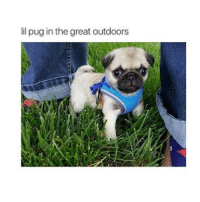 Bunnies, Memes, and Puppies: lil pug in the great outdoors aw he is so cute 😍 like for this puppy 😄 comment your pet 👍🏽 I have a bunny 🐰