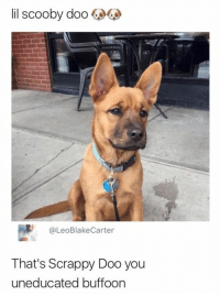 Funny, Lol, and Memes: lil scooby doo  @LeoBlakeCarter  That's Scrappy Doo you  uneducated buffoon Hilarious Memes 20+ Pics - #funnymemes #funnypictures #humor #funnytexts #funnyquotes #funnyanimals #funny #lol #haha #memes #entertainment