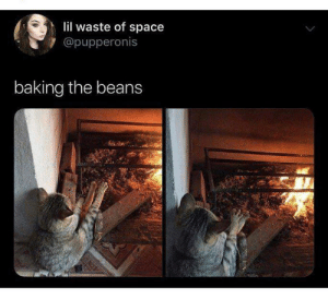 Space, Baking, and Lil: lil waste of space  @pupperonis  baking the beans