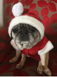 Lilly and the rest of the Saffron team wish you all a safe and happy Christmas.: Lilly and the rest of the Saffron team wish you all a safe and happy Christmas.